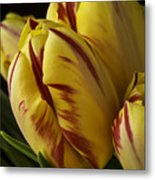 Red Yellow Tulip Metal Print