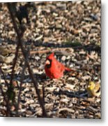 Redbird And American Golden Finch Metal Print