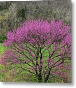Redbud And Field In Jefferson County Metal Print