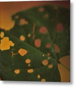 Redbud In Fall Metal Print