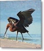 Reddish Egret Nabs A Fish Metal Print
