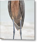 Reddish Egret Stands Tall Metal Print
