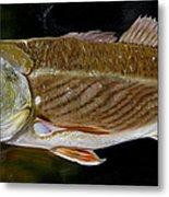 Redfish Study  Metal Print
