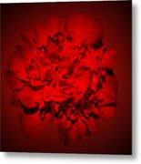 Red,red Metal Print