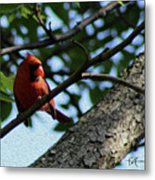 Red's Ray Of Light Metal Print