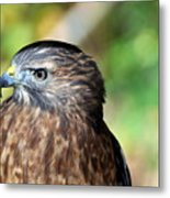 Redtail Metal Print by Marty Koch