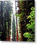 Redwood Forest 5 Metal Print
