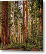 Redwood Forest Landscape Metal Print