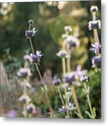 Redwood Meadow Light 2 Metal Print