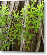 Redwood Tree Art Prints Baslee Troutman Metal Print