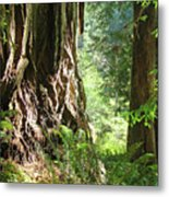 Redwood Tree Art Prints Redwoods Forest Metal Print