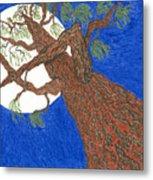 Redwood Tree Metal Print