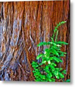 Redwood Tree Trunk At Pilgrim Place In Claremont-california   Metal Print