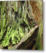 Redwood Trees Art Prints Baslee Troutman Metal Print