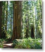 Redwood Trees Forest California Redwoods Baslee Metal Print