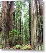 Redwood5 Metal Print