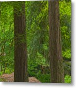 Redwoods #2 Metal Print