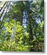 Redwoods Trees Forest Art Prints Baslee Troutman Metal Print