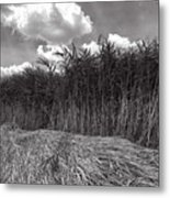 Reeds And Clouds Metal Print