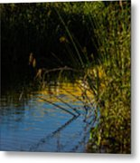 Reeds And The Riverside Metal Print