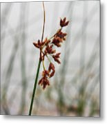 Reeds Metal Print