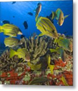 Reef Scene Metal Print by Dave Fleetham - Printscapes