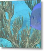 Reef Tang Metal Print