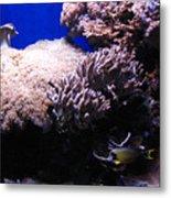Reef Tank Metal Print