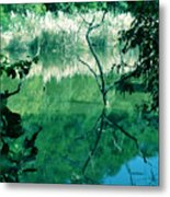 Reflected Branches Metal Print