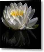 Reflected Lily  Metal Print