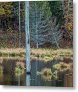 Reflected Tree Metal Print