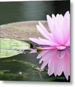 Reflected Water Lily Metal Print