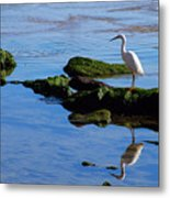 Reflecting On Dinner Metal Print