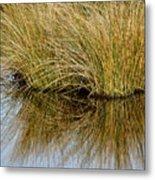 Reflecting Reeds Metal Print