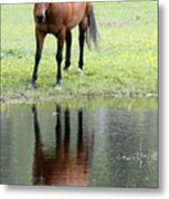 Reflecting Horse Near Water Metal Print
