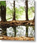 Reflecting Tree Trunks Metal Print