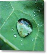 Reflection In A Dew Drop Metal Print