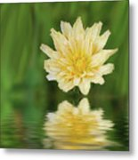 Reflection In Yellow Metal Print