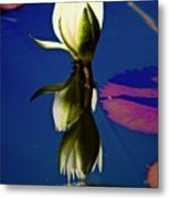 Reflection Of A Water Lily Metal Print