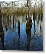 Reflections At Big Cypress Metal Print