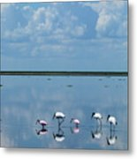 Reflections At The Wetland Metal Print