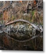 Reflections Iguana Metal Print