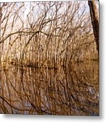 Reflections In The Swamp Metal Print