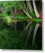 Reflections Of A Forest Metal Print