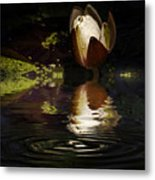 Reflections Of A Lily Metal Print