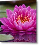 Reflections Of A Waterlily Metal Print