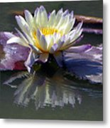Reflections Of Beauty Metal Print