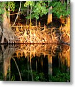 Reflections Of Our Roots Metal Print