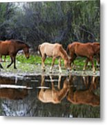 Reflections Of Wild Horses In The Salt River Metal Print