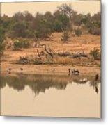 Reflections On Safari Metal Print